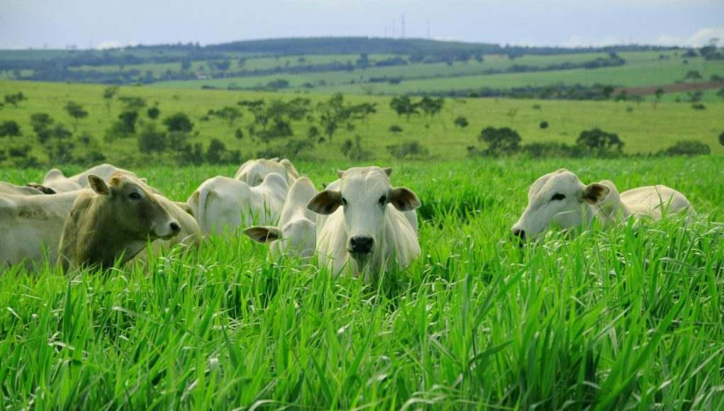 Forragens de Alta Qualidade para Criação Animal