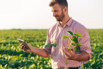 MBA em Manejo da Fertilidade do Solo e Nutrição de Plantas